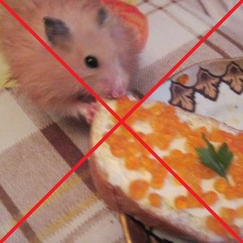 Чем можно накормить хомяка в домашних условиях