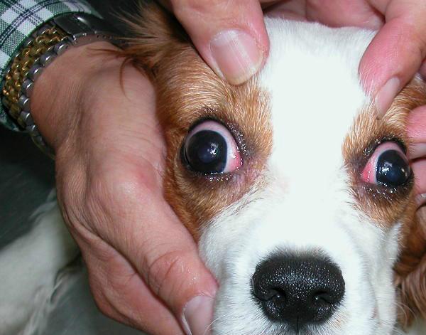 Отек глаза фото и лечение