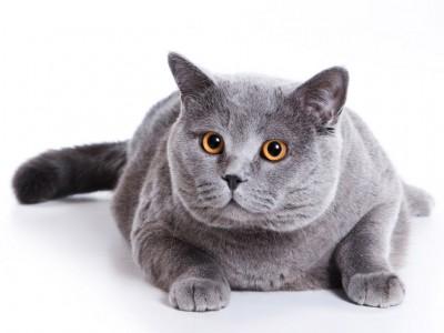 питание для годовалых стерелизованных кошек