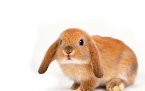 ассоциированная вакцина для кроликов инструкция по применению